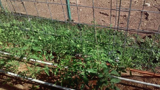 Alysia's garden 2