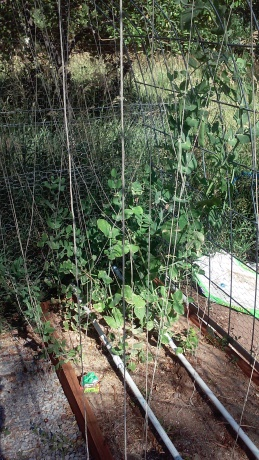 Alysia's garden 3