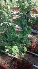 Alysia's garden 4