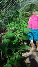 Alysia's garden 7