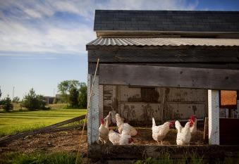 chicken-coop-343942_960_720